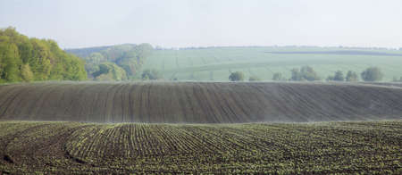 Panorama of plowed fields with young shoots
