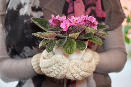 woman with a pot of violets in mittens.