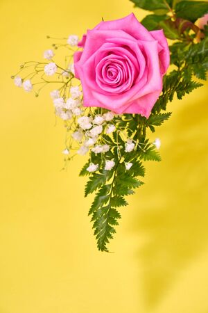 Pink rose with a leaf of green fern and a hypsophila Bush on a yellow background, place for text. Imagens
