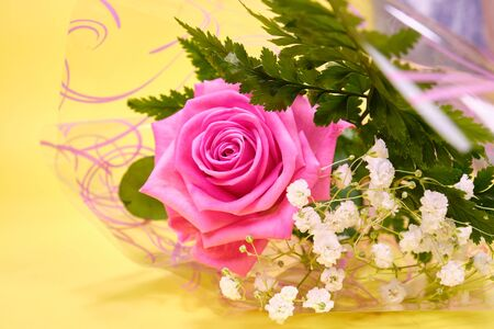 Pink rose with a leaf of green fern and a hypsophila Bush on a yellow background,