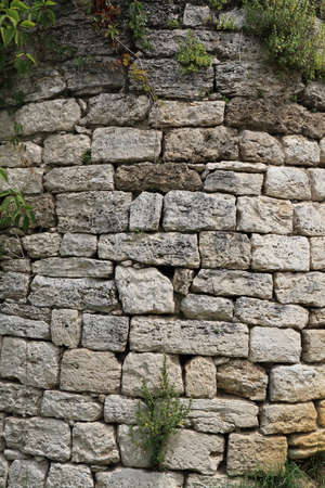 twined: The rounded corner of an old wall from the limestone, twined plants, background