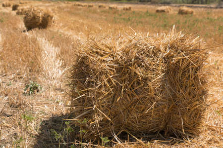 Haystacks, left in the field after harvesting, shallow depth of field photo