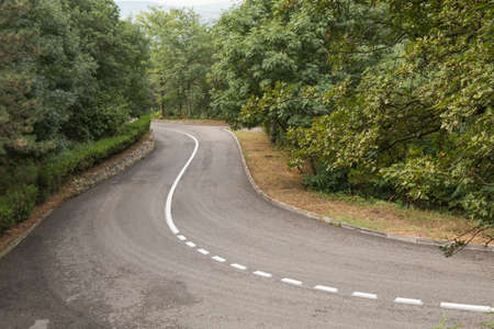 dividing: The twisting asphalted road with a dividing line through the wood