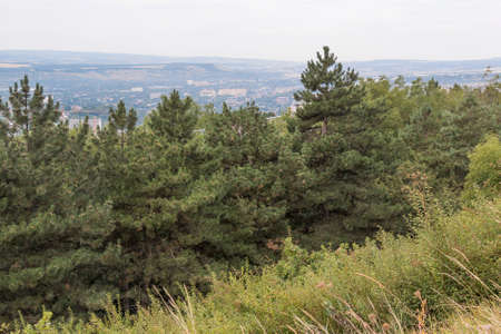 pyatigorsk: Pineta alle pendici del Monte Mashuk in Pyatigorsk Russia
