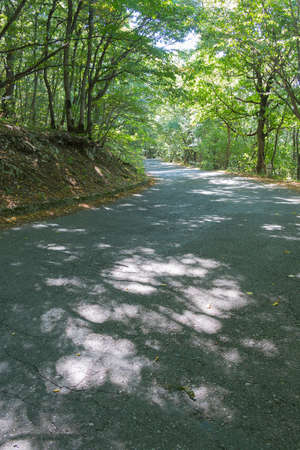 bollards: Old asphalt road leading through a mysterious forest