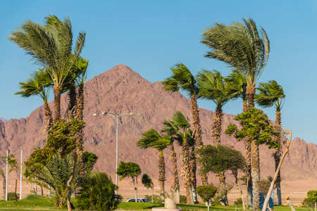 sharm: Views of palm trees and mountains in the desert in Sharm el-Sheikh, Egypt