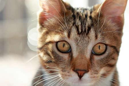 nariz roja: Portrait of domestic cat with yellow eyes