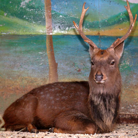 deer  spot: Sad brown deer in zoo cage