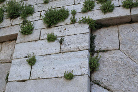 Details of an old white stone wall with plants between bricks. Antique background Stok Fotoğraf