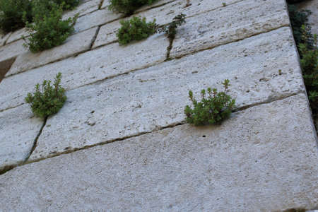Details of an old white stone wall with plants between bricks. Antique background Stock Photo