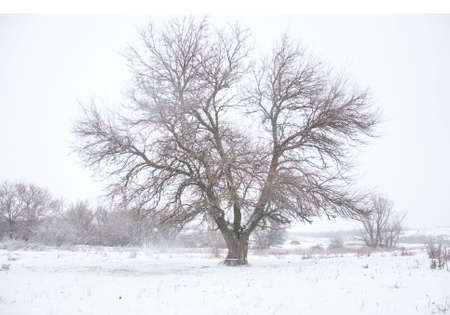 snowy weather of a winter village landscape. Against the background of trees, steppe