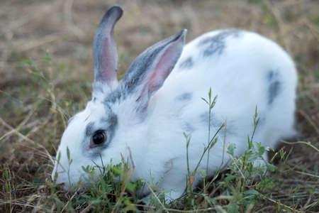 Close up head of rabbit