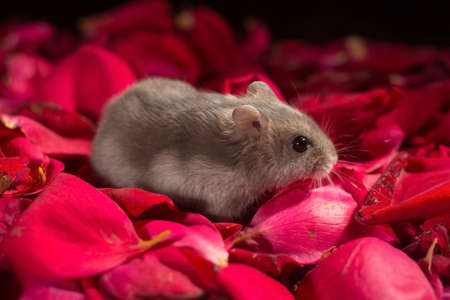 Hamster among the flowers. Hamster is looking at the camera. Banco de Imagens