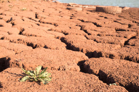 Green plant on cracked dry earth. Drought. Water scarcity. Changing of the climate. Dry season. red iron ore ground