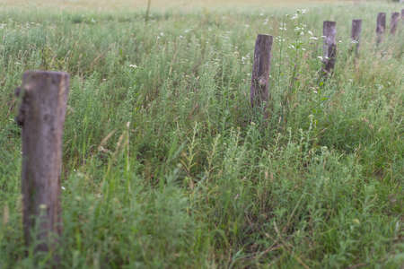 Line of new fence posts ready to take the fence panels fence posts, lined up along, vintage wooden fence posts, in the grass. Natural background Stockfoto
