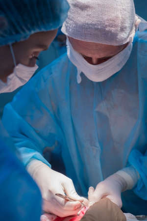 Children's surgeons perform urological operations. A man and a woman in a mask and a blue sterile coat in the operating room. A team of surgeons is conducting an operation. Treatment of inguinal hernia, testicular edema, testicular disease, varicocele, cryptorchidism. Focus on the warm light of the lamp, the background is illuminated by cold blue light. Stockfoto