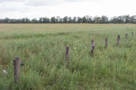 fence posts, lined up along, vintage wooden fence posts, in the grass. Natural background
