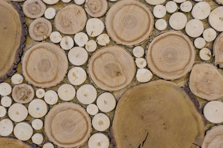wood texture of a cut of a round tree on a cut, various caliber. Background, wall, wallpapers for desktop, blank, pattern, copy space Woodpile of birch and pine wood