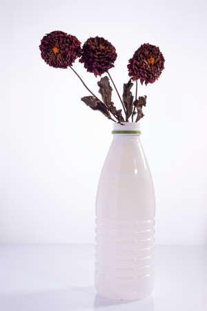 several dry dahlia flowers in a white plastic bottle on a white background. Environmental plastics pollution concept. Foto de archivo