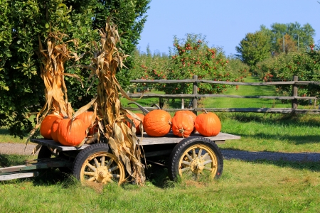 Pumpkins in Wagon for Autumn Harvest  photo