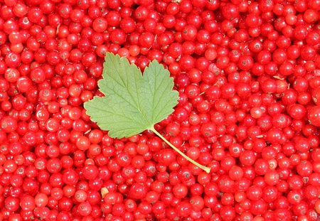background of red currant berries and leaf  Stock Photo
