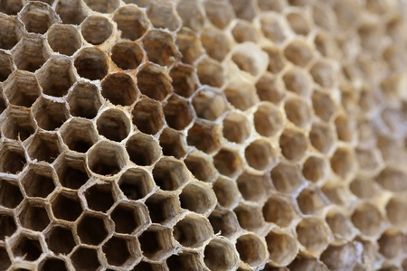 Close up view of an empty wasp nest