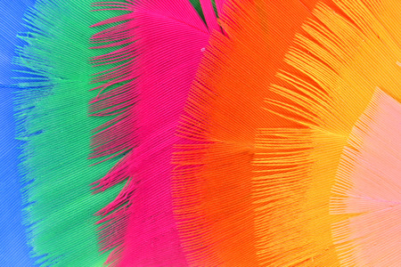 weightless: background with colorful feathers  Stock Photo