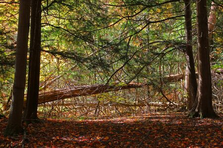Deep forest with fallen tree. Фото со стока