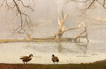 Foggy morning at the lakers Фото со стока