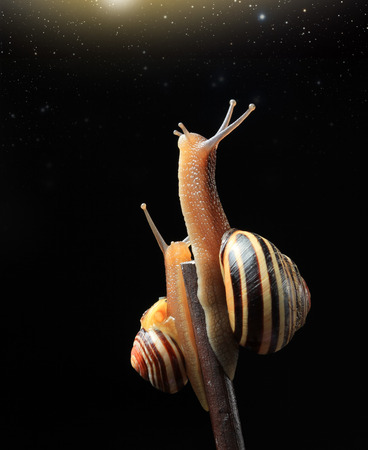 two watching stars snails Stock Photo