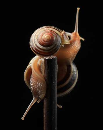 two cute snails hugging on black background