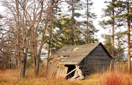 abandoned house among the trees.