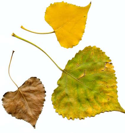 autumn leafs Stock Photo - 11878643