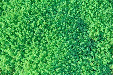 Natural short grass Stock Photo - 12145068
