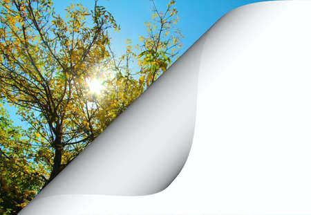 Pagina cielo aperto riccio e l'albero
