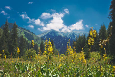 landscape  summer in mountains