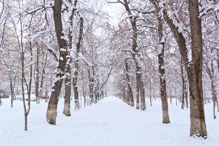 paesaggio invernale park Archivio Fotografico