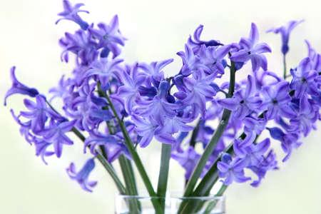 fiore di giacinto