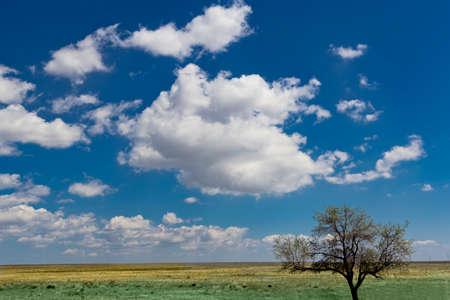 tree field landscape Stock Photo - 16935635