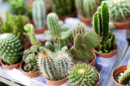cactus  plant set Stock Photo - 16935568