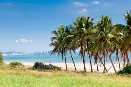 palm beach, Haynan Stock Photo - 16935545