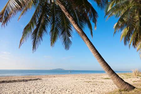 sea palm  beach Stock Photo - 16936379