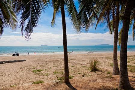 palm sea beach Stock Photo - 16936380