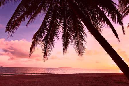 tramonto rosso e palme Archivio Fotografico