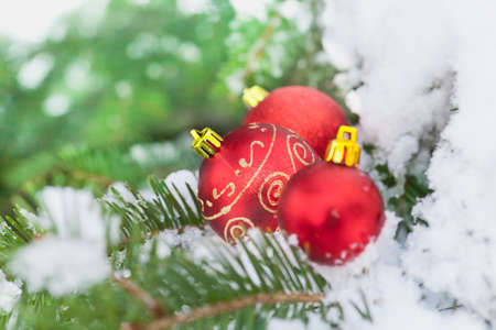Christmas  decoration on snow Stock Photo - 17849561