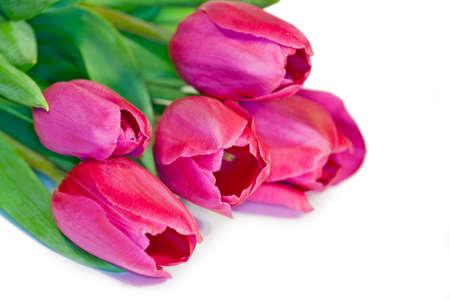 flower tulip closeup Stock Photo - 19114706