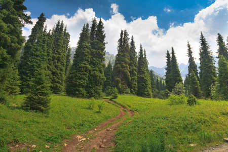 Mountain landscape  forest photo