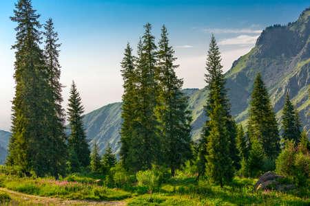 Aspen groves in rocky mountains  photo
