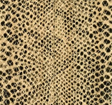 pelle di serpente come sfondo