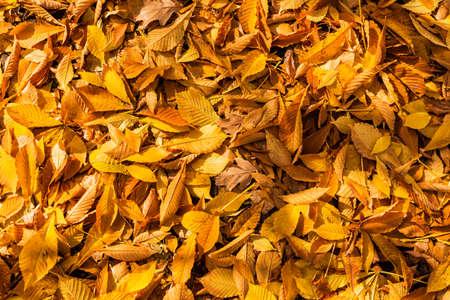 foglie modello fogliame Archivio Fotografico